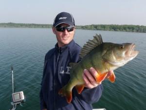 Perche grosse Doc II 300x226 Pêche au lac du Der Chantecoq