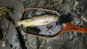 L1020455 300x169 Voyage de pêche en Slovénie