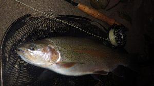 IMGP3113 300x169 Voyage de pêche en Slovénie