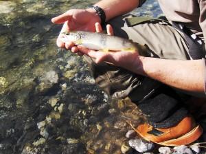 chauquet canadien peche 07 009 300x224 Stage pêche mouche noyée