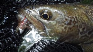 IMGP3133 300x169 Voyage de pêche en Slovénie