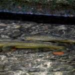 151219 1 pf 150x150 Moment de pêche