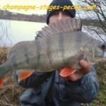 Cperche45cm Copiwww 150x150 Galerie photos pêche des carnassiers