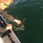 017 150x150 Moment de pêche