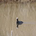 DSCN0307 150x150 Au Domaine du grand étang