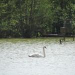 DSCN0372 150x150 Au Domaine du grand étang