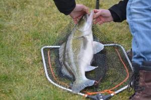 150220 Pêche Etang 36 300x199 Colonie de pêche de février, une réussite! Dernière partie