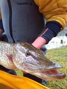 90 cm bro bruno 225x300 Colonie de pêche de février première partie