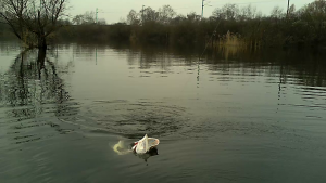 vlcsnap 2015 03 29 12h37m27s100 300x169 Pêche du brochet en float tube