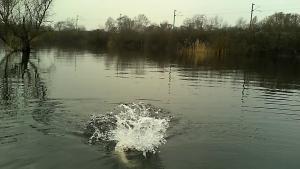vlcsnap 2015 04 03 23h49m52s204 300x169 Pêche du brochet en float tube