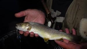 IMGP1955 300x169 Partie de pêche à la mouche coup du soir