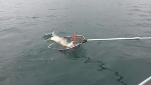 unnamed 5 300x169 Journée découverte de la pêche au Der.