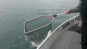 unnamed 6 300x169 Journée découverte de la pêche au Der.