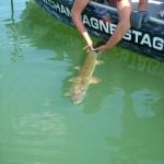 IMG 0318 150x150 Idées séjours stages  pêche