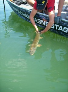 IMG 0318 224x300 Stage de pêche au lac de Madine
