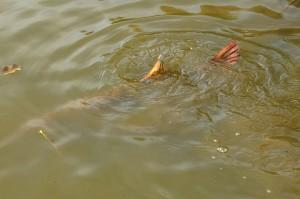 151030 GE 32 pf 300x199 Séjour de pêche à la Toussaint pour jeunes et ados, acte 2