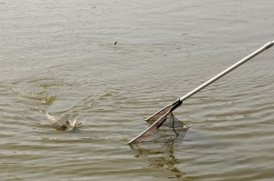 151030 GE 8 pf 300x199 Séjour de pêche à la Toussaint pour jeunes et ados, acte 2