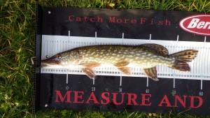 IMGP2799 e1452896336228 300x169 Centre de pêche no kill du Domaine du grand étang de Narcy