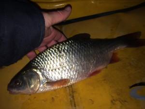 IMG 0720 300x225 Pêche du gros gardon en hivers