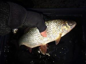 IMG 08591 300x225 Colonie de pêche aux vacances dhivers