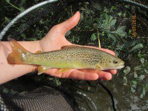 IMG 0351 300x225 Colonie de pêche de la truite