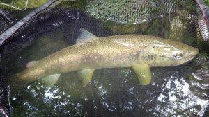 IMGP3095 300x169 Voyage de pêche en Slovénie