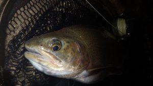 IMGP3115 300x169 Voyage de pêche en Slovénie