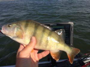 IMG 1889 300x225 Sortie de pêche sur le lac du Der