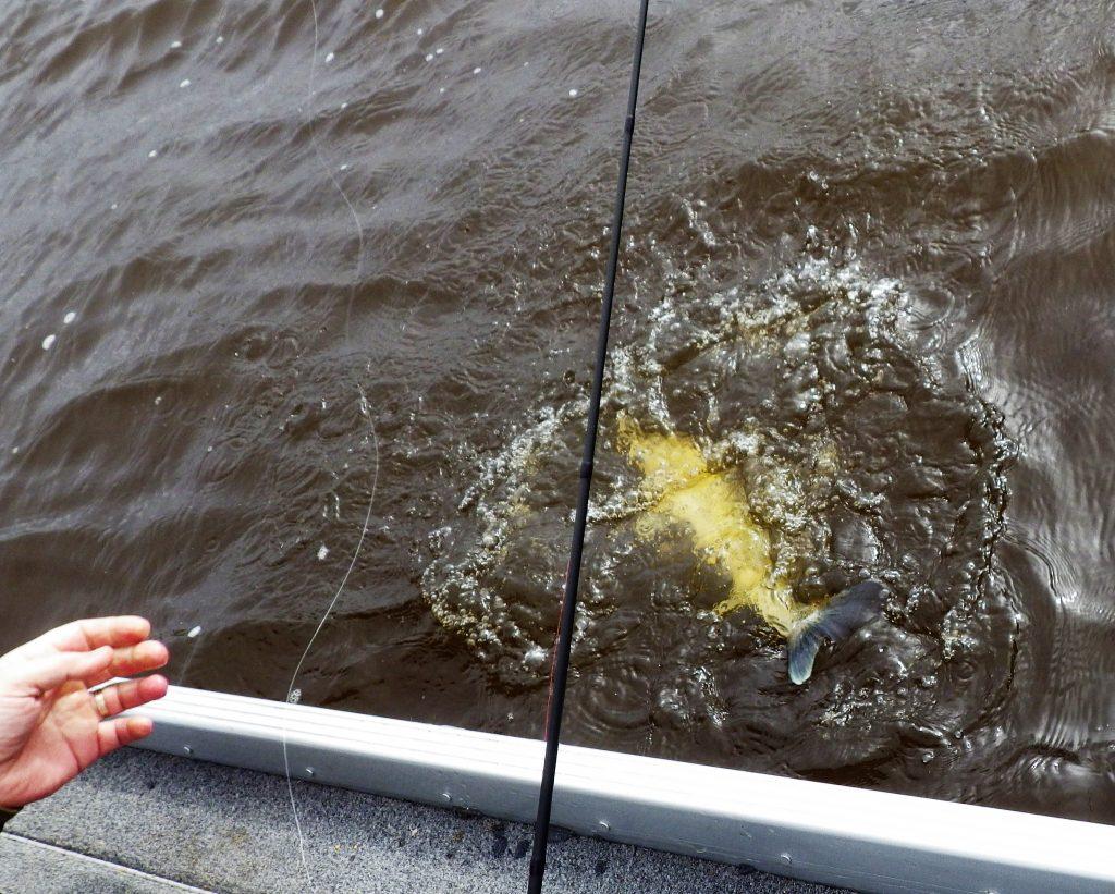 IMGP3548 2 1024x821 Séjour de pêche en Hollande