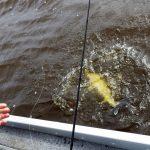 IMGP3548 2 150x150 Moment de pêche