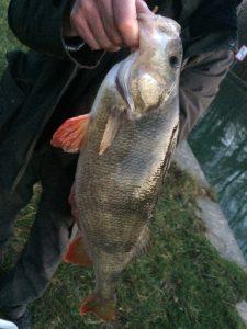 IMG 4169 e1515963546534 225x300 Nouveau stage pêche tactile hivernale