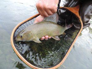 DSCN1106 300x225 Voyage de pêche en Bosnie