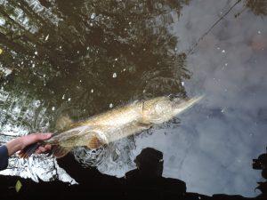 DSCN1702 1 300x225 Séjour de pêche en Hollande