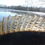 DSCN1897 150x150 Galerie photos pêche des carnassiers