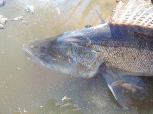 DSCN1891 300x225 Stages pêche adulte, ados et jeune