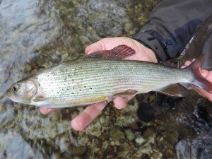 DSCN1083 300x225 Voyage de pêche en Slovénie